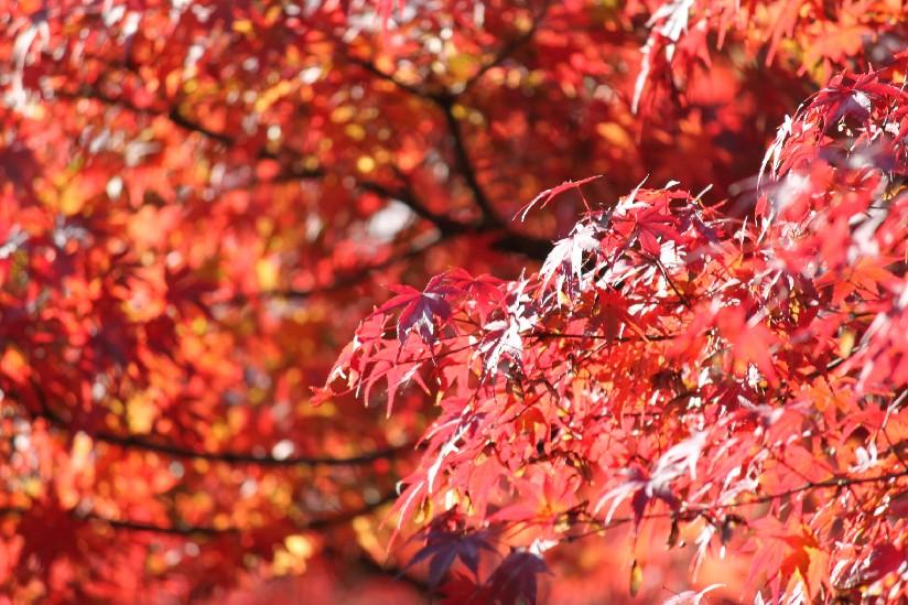 東福寺_c0180971_21124970.jpg