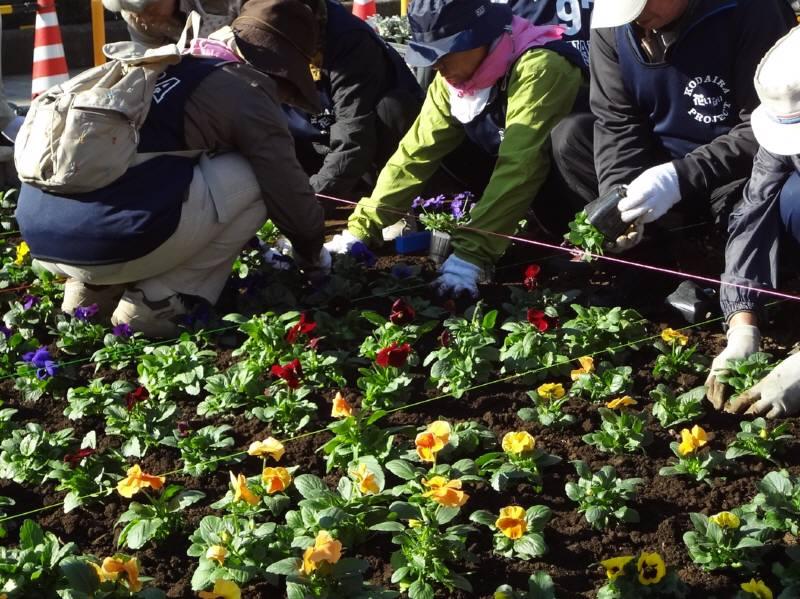 全日本花いっぱい小平大会準備_f0059673_20501097.jpg