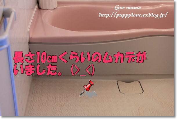 b0136683_1121526.jpg