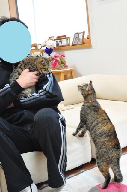 迷子の子猫ちゃん♪_a0126590_23124288.jpg