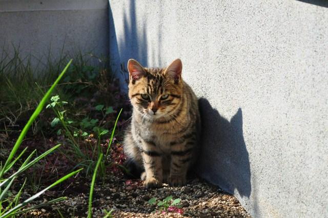 迷子の子猫ちゃん♪_a0126590_231319.jpg