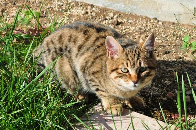 迷子の子猫ちゃん♪_a0126590_2314726.jpg