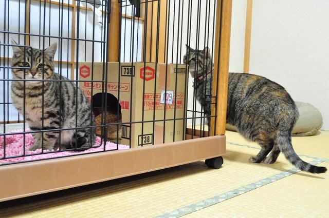 迷子の子猫ちゃん♪_a0126590_23153841.jpg
