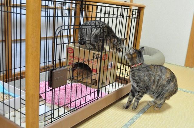 迷子の子猫ちゃん♪_a0126590_23164571.jpg