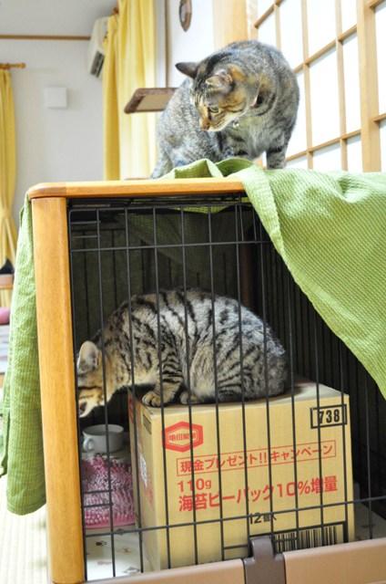 迷子の子猫ちゃん♪_a0126590_23175512.jpg