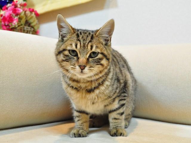 迷子の子猫ちゃん♪_a0126590_23185321.jpg