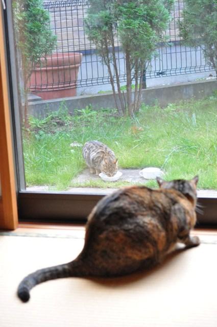 迷子の子猫ちゃん♪_a0126590_2335666.jpg