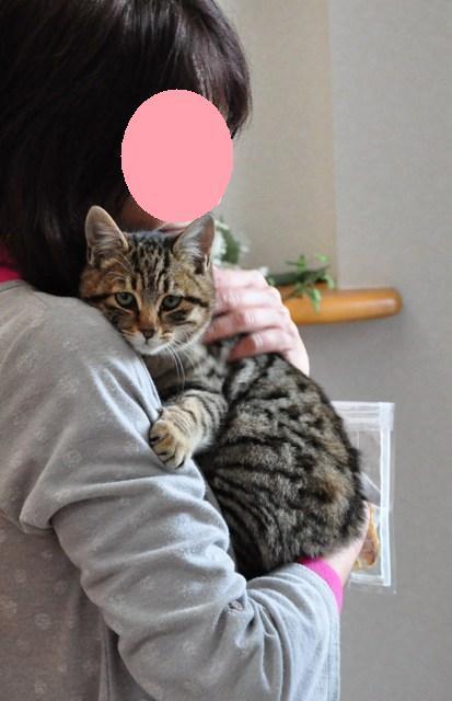 迷子の子猫ちゃん♪_a0126590_2363619.jpg