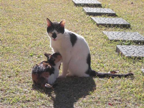 猫ブログ_d0000995_23181524.jpg