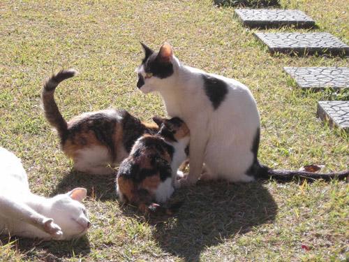 猫ブログ_d0000995_23183984.jpg