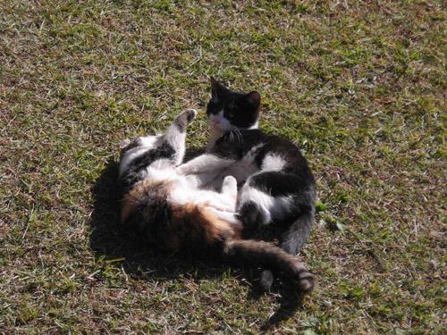 猫ブログ_d0000995_23194854.jpg