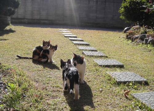 猫ブログ_d0000995_231995.jpg