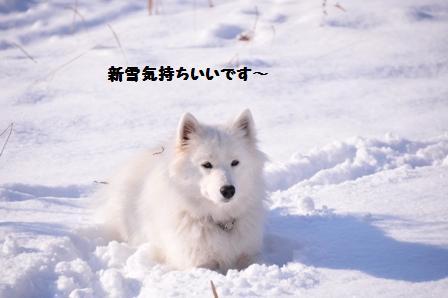 f0212597_22382646.jpg