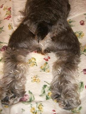 犬になりたい、ときどき。_a0057402_13202672.jpg