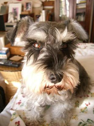 犬になりたい、ときどき。_a0057402_1320975.jpg