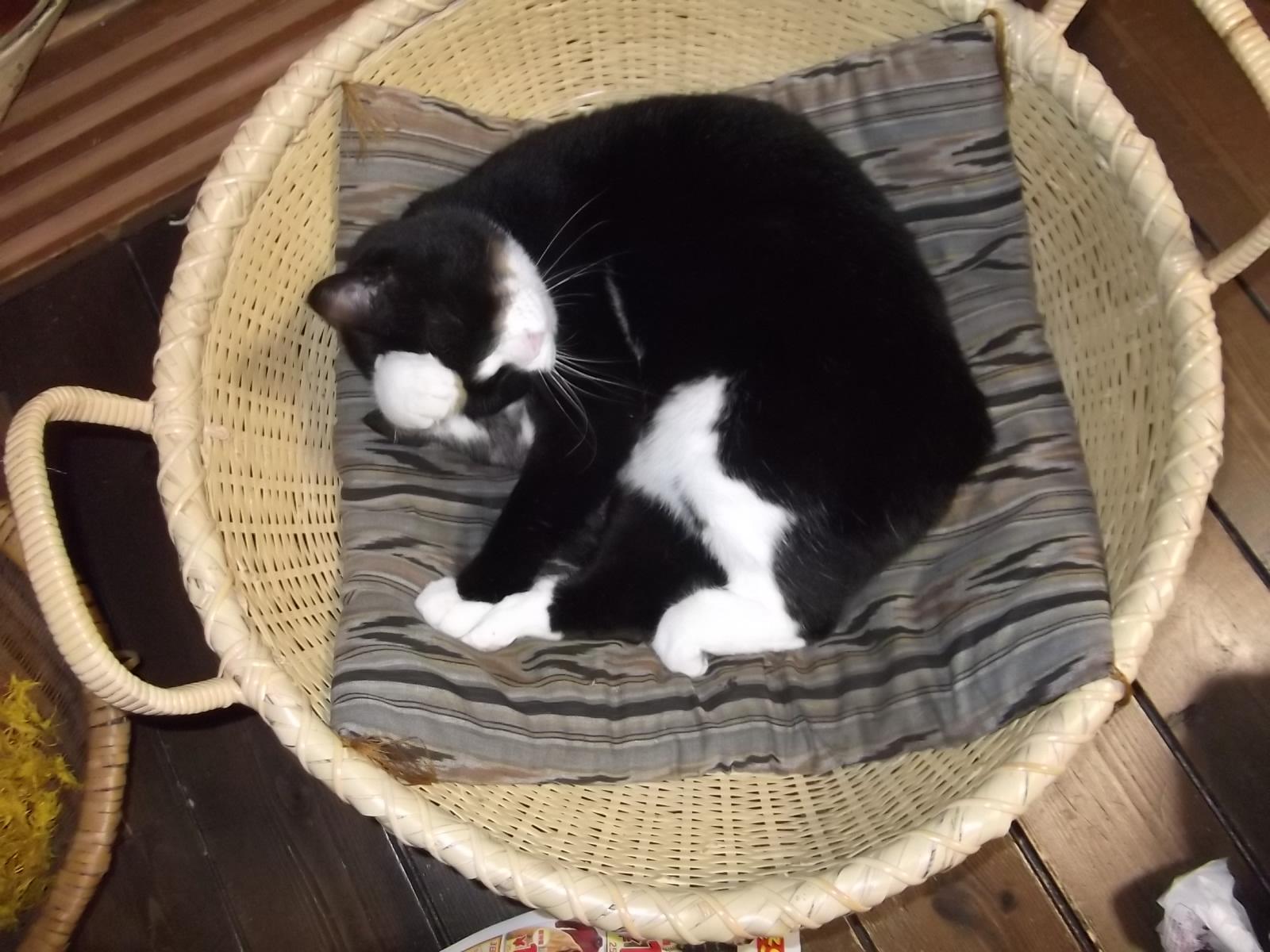 籠猫_a0203003_2036119.jpg