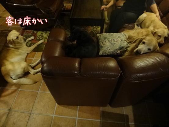 優秀すぎた盲導犬_f0064906_16583521.jpg
