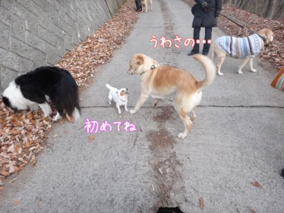 優秀すぎた盲導犬_f0064906_17112244.jpg
