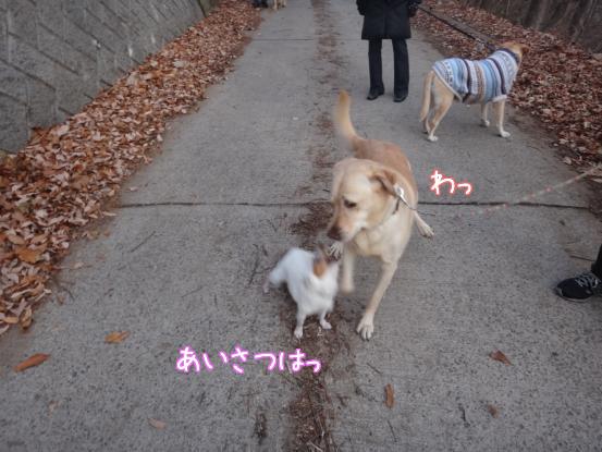 優秀すぎた盲導犬_f0064906_17113896.jpg