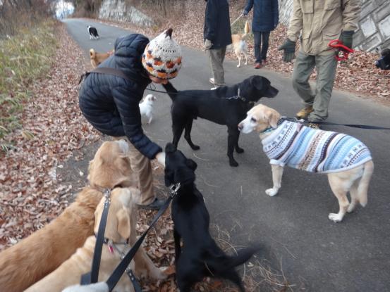 優秀すぎた盲導犬_f0064906_1716614.jpg