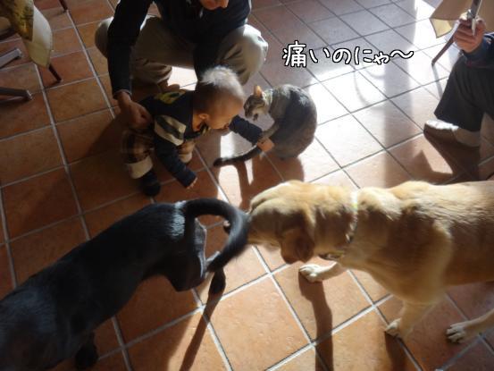 優秀すぎた盲導犬_f0064906_17233439.jpg