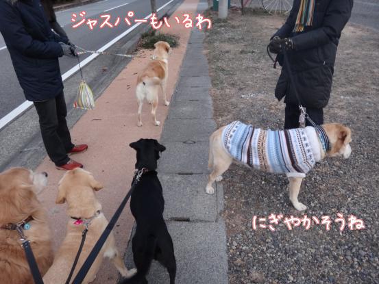 優秀すぎた盲導犬_f0064906_1725812.jpg