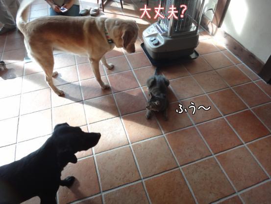 優秀すぎた盲導犬_f0064906_17272749.jpg