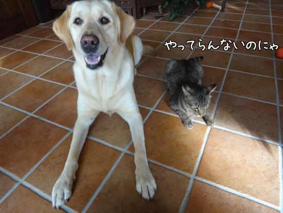 優秀すぎた盲導犬_f0064906_17344597.jpg