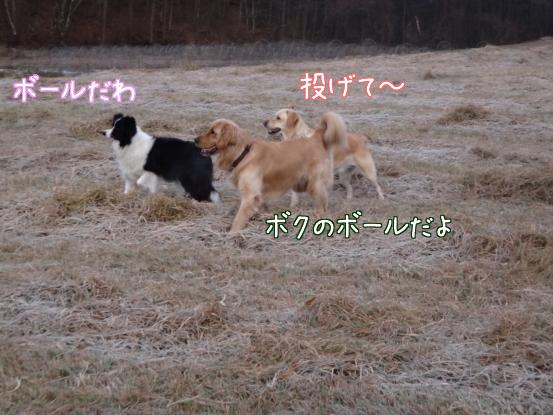 優秀すぎた盲導犬_f0064906_175917.jpg