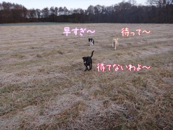 優秀すぎた盲導犬_f0064906_1763082.jpg