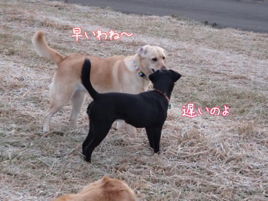 優秀すぎた盲導犬_f0064906_176455.jpg