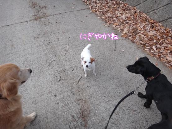 優秀すぎた盲導犬_f0064906_1795472.jpg