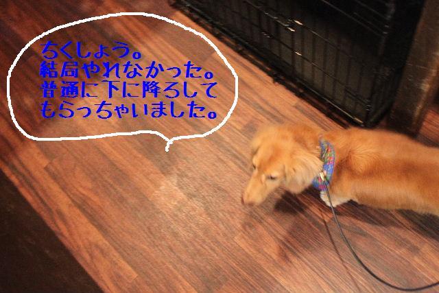 b0130018_901449.jpg