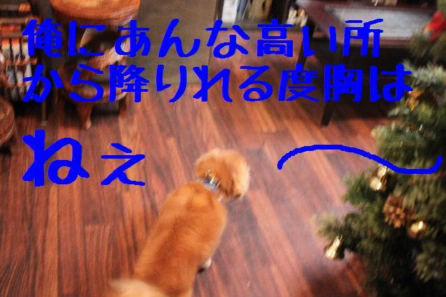 b0130018_901916.jpg