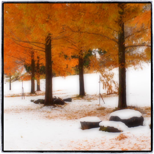 初雪_e0169421_16102561.jpg