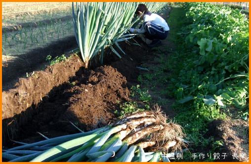 ネギの収穫に行って来たの巻_a0041925_0381475.jpg