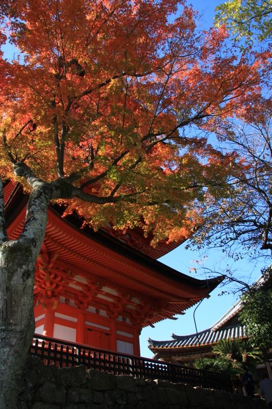 宮島の紅葉を追って_b0190540_951255.jpg