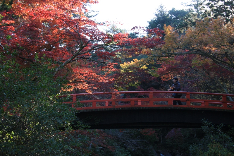 宮島の紅葉を追って_b0190540_9514754.jpg