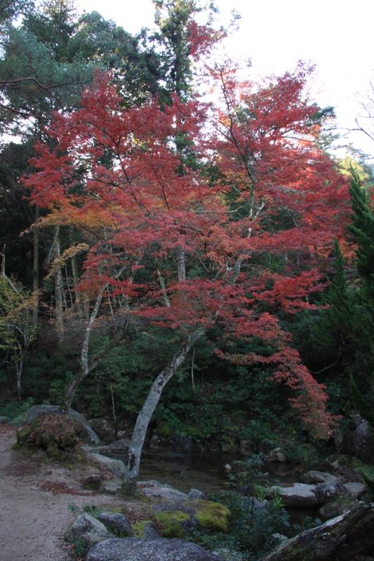 宮島の紅葉を追って_b0190540_952444.jpg