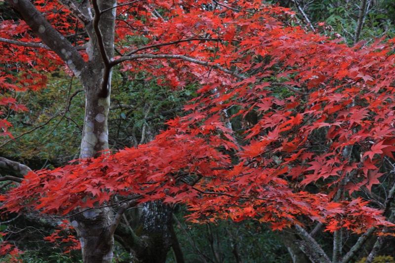 宮島の紅葉を追って_b0190540_9532143.jpg