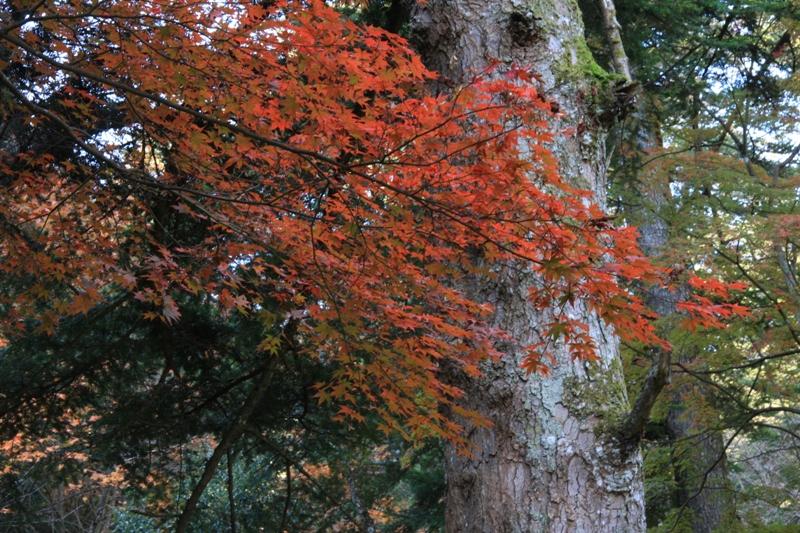 宮島の紅葉を追って_b0190540_953351.jpg
