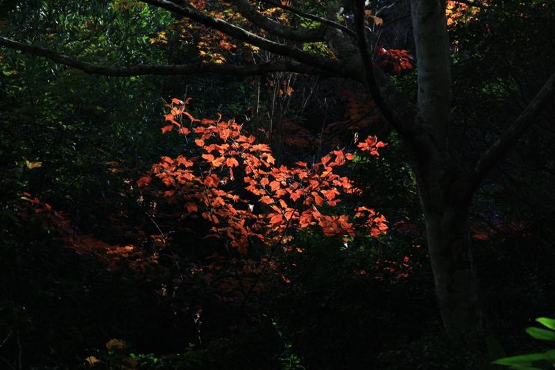 宮島の紅葉を追って_b0190540_9533718.jpg