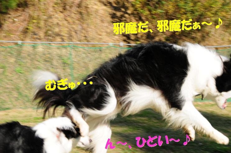 c0147241_1635949.jpg