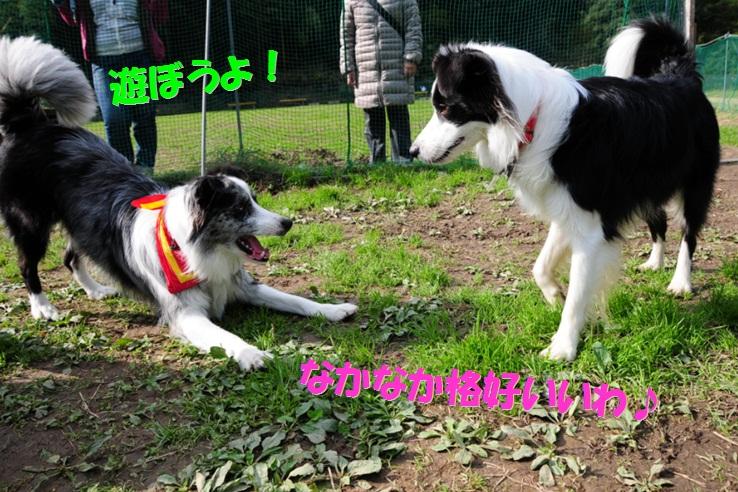c0147241_1642638.jpg