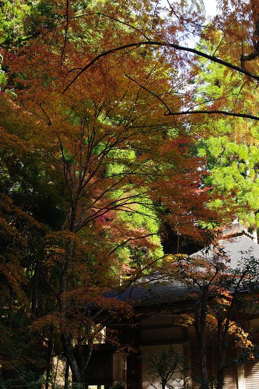 紅葉 ~高山寺~_f0152550_22341723.jpg