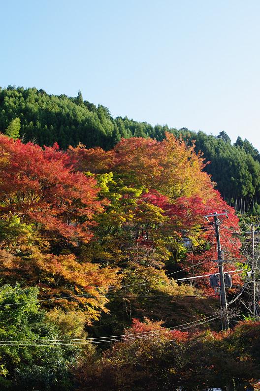 紅葉 ~高山寺~_f0152550_22351529.jpg