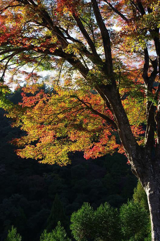 紅葉 ~高山寺~_f0152550_22352384.jpg
