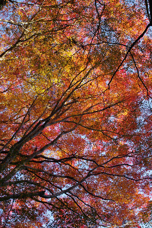 紅葉 ~高山寺~_f0152550_2239879.jpg
