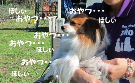f0181462_1892699.jpg