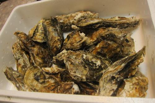 oyster lover._c0153966_17314174.jpg